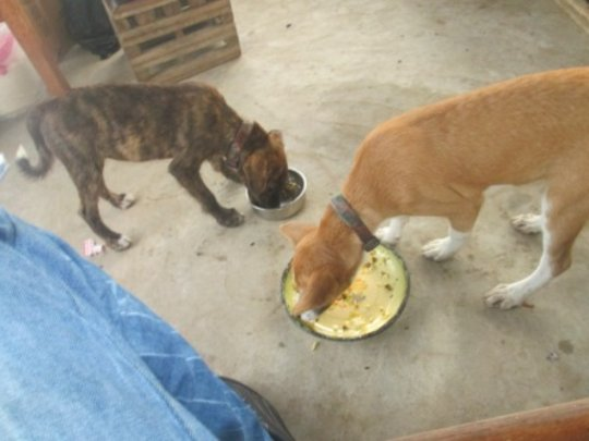 Pets in neigbourhood greedily eating