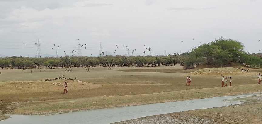 15082019-Koonthakulam-Bird-Sanctuary-4
