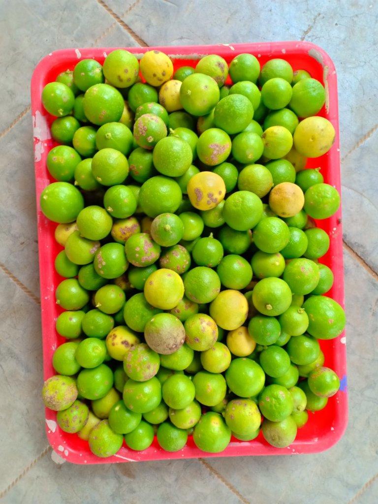 Vanavasi-school-kitchen-plants-31-07-2019-5