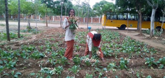 Vanavasi-school-kitchen-plants-31-07-2019-3