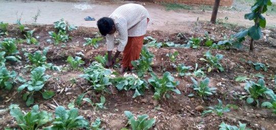 Vanavasi-school-kitchen-plants-31-07-2019-2