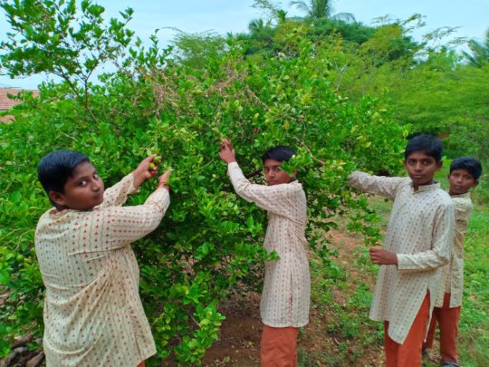 Vanavasi-school-kitchen-plants-31-07-2019-4