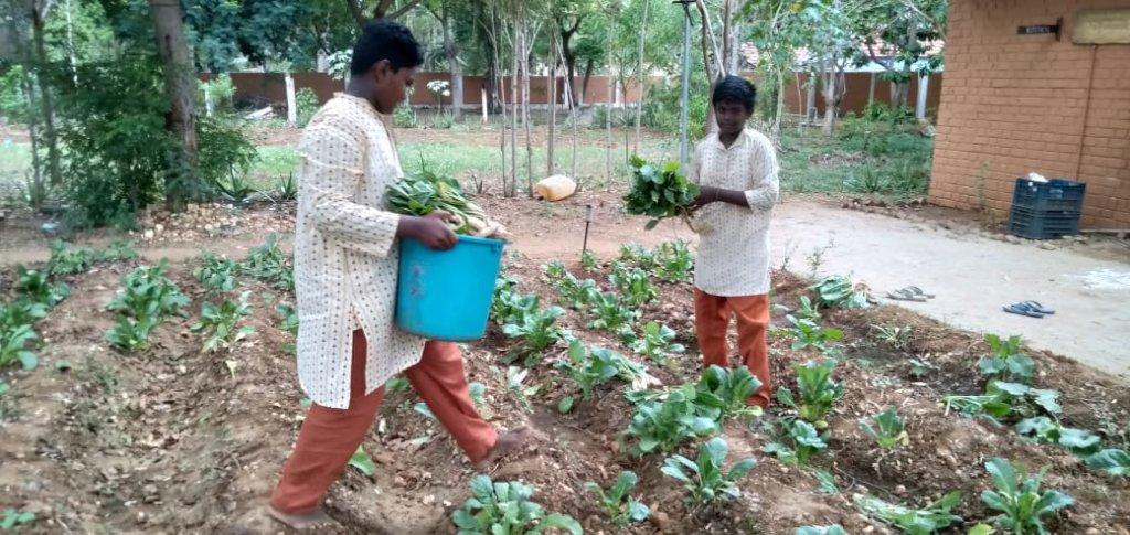 Vanavasi-school-kitchen-plants-31-07-2019-1
