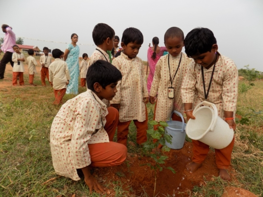 Watering the planted saplings
