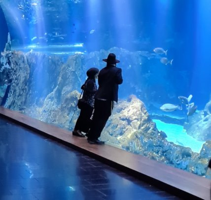 Visitors enjoying the re-opened Aquarium