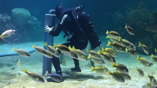 Volunteer diver cleaning one of the tanks