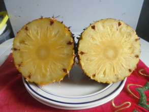 pinapple ready for processing