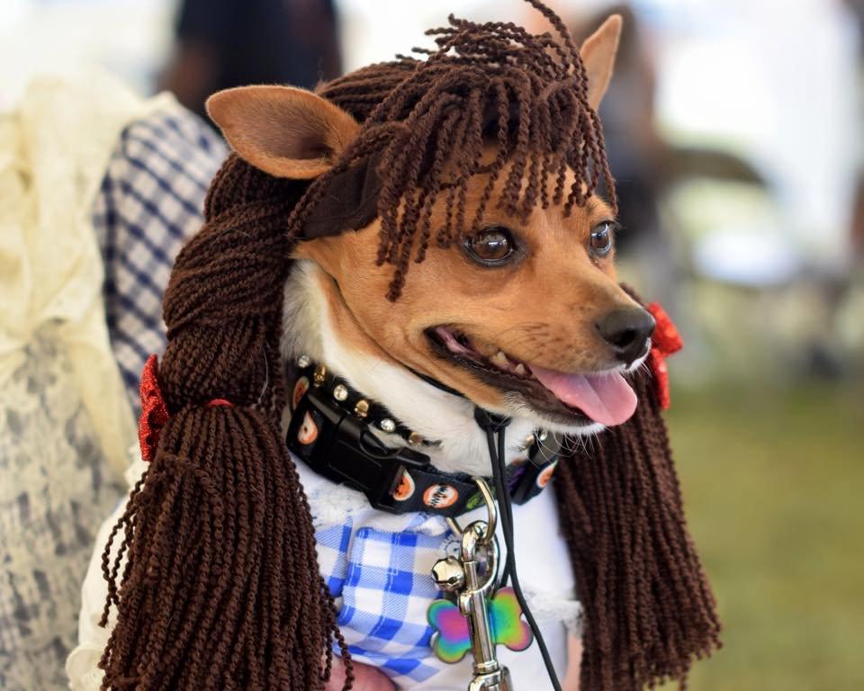 Pet costume contest participant