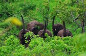 Help rescue over 100 elephants in Malawi