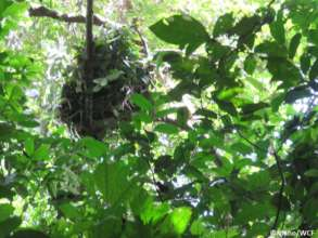 Anti-poaching team discovering a chimpanzee nest