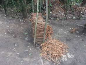 Pile of chewing sticks found in the forest