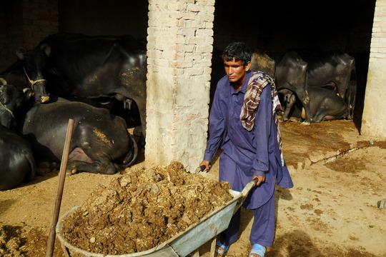 Sight for 2.6 Mn. poor blind children in Pakistan