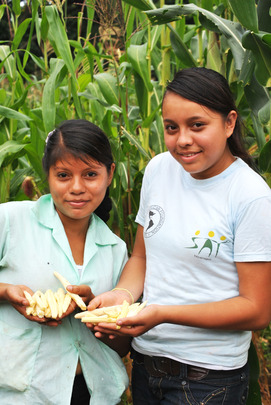 2nd year SAT students show successful harvest