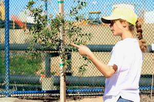 Youth Planting Supervisor talking about a tree