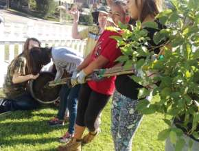The students release Stella the tree from her pot