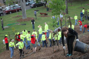 Volunteers plant, mulch and water new trees
