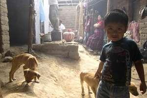 Marvin con los cachorros..gha build in background
