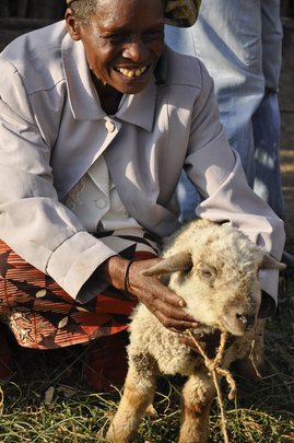Mary Wanjiku with One Sheep in Ndathi, Kenya