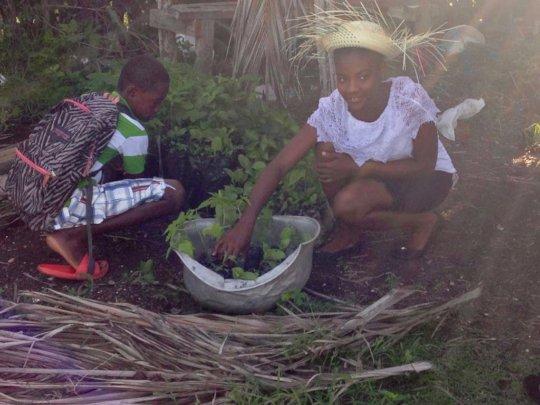 Children harvest vegetables from the school garden