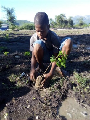 Planting Moringa in the School Garden