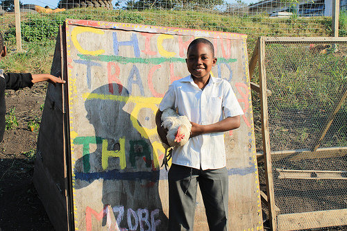 Thanda students built a chicken tractor