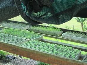 Our Seedling Nursery