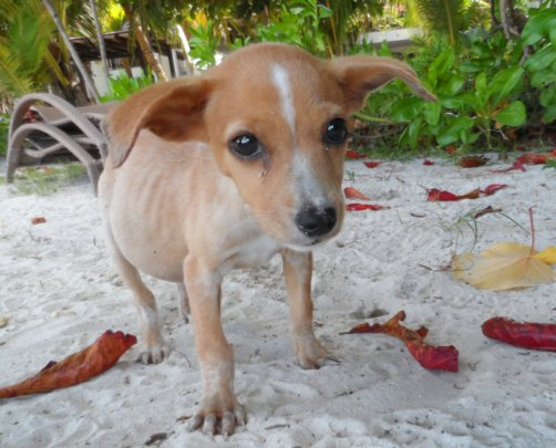 Help Abused & Neglected Animals in the Seychelles