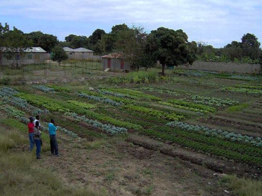 Long View School Garden