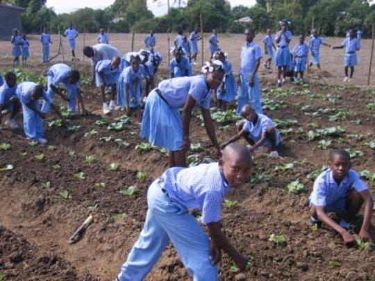 kids gardening at school, Haiti