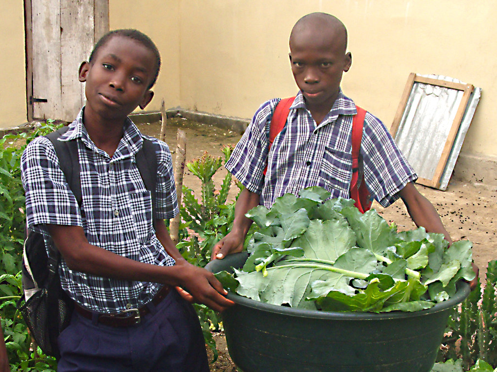 Provide Seeds for Haitians to Grow 50 Tons of Food