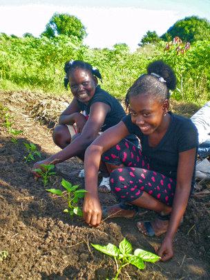 Peppers, School Garden, Haiti