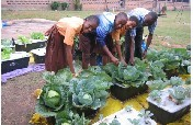 Water-Saving Agriculture and IT for Ghanaian Youth