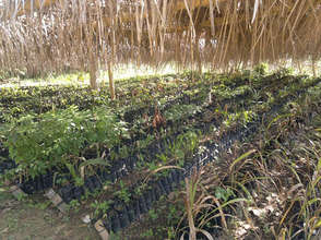 Nursery for our next planting in June @ Upala