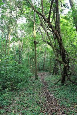 San Luis forest trail