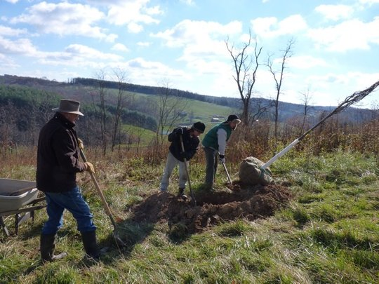 Hole Dug for a Linden Tree
