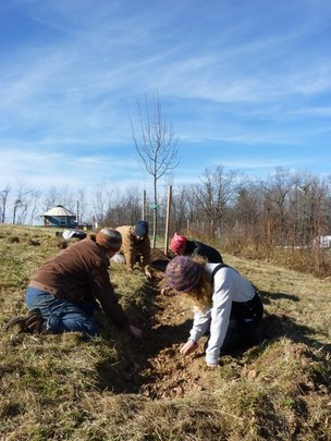 Planting bulbs for Bee Forage