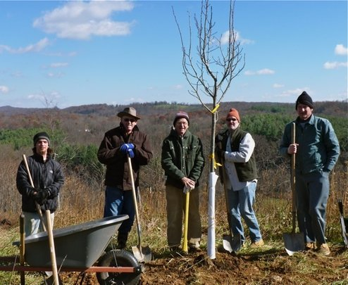 A Linden Tree Planted