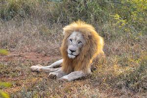 Matsieng in the Bushveld