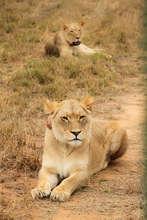Tswalu and Kalahari