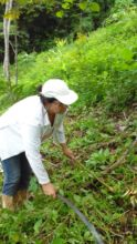 Teresa chopping grasses away from baby trees