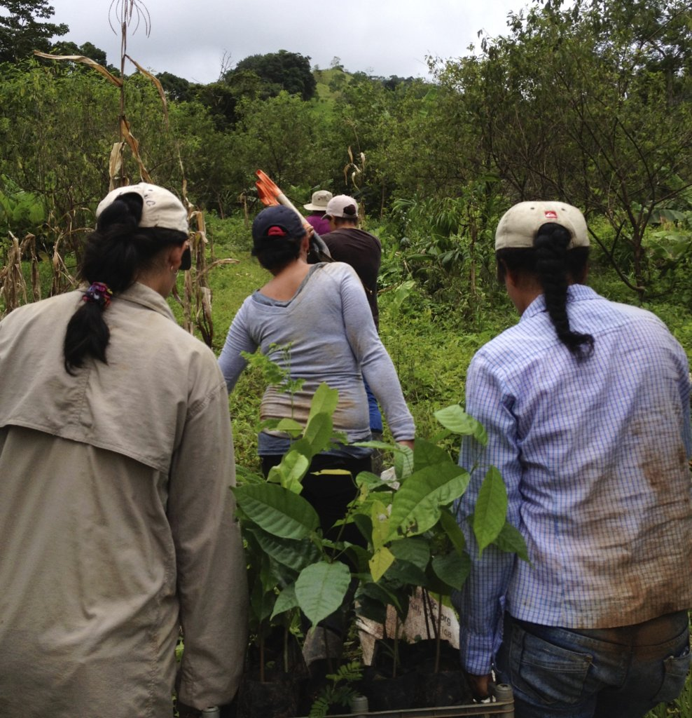 project photo for Plant 30,000 native trees Costa Rican owned farms