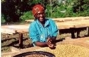 Support Smallholder Coffee Farmers in Tanzania