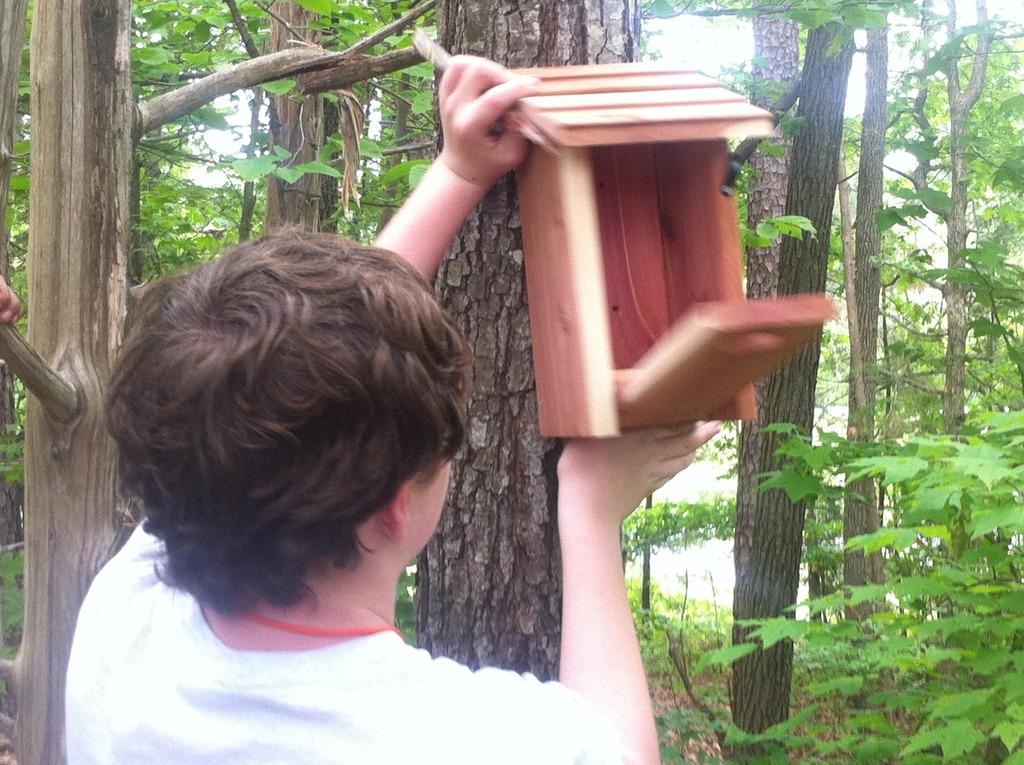 Joe placing the Bluebird box on the selected tree