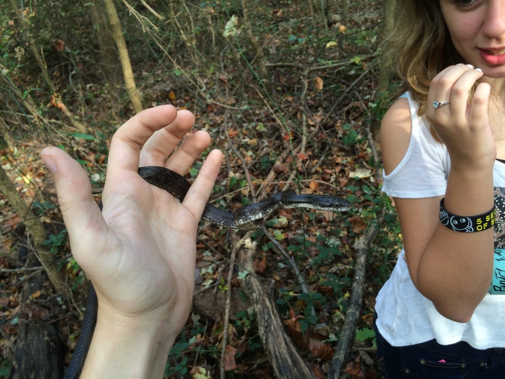 Beaver teeth marks identified by Githens students