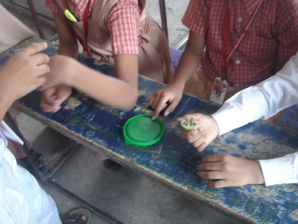 Children examine mosquito larvae