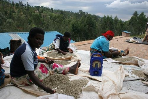 Market Access via Radio for Rwandan Coffee Farmers