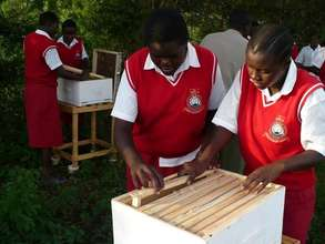Girls inspect hives for pests before colonisation