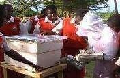 LifeSkills: Beekeeping Training for Girls in Kenya
