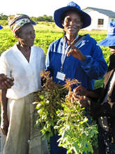 Woman farmer with her latest crop