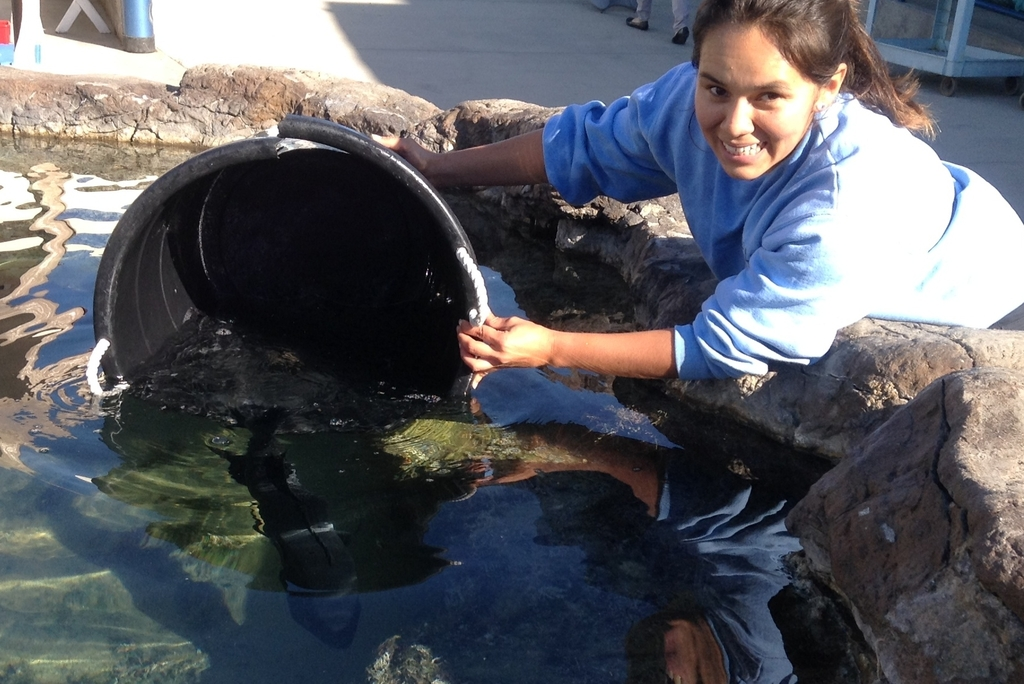Evelyn returning fish to the tidepool tank